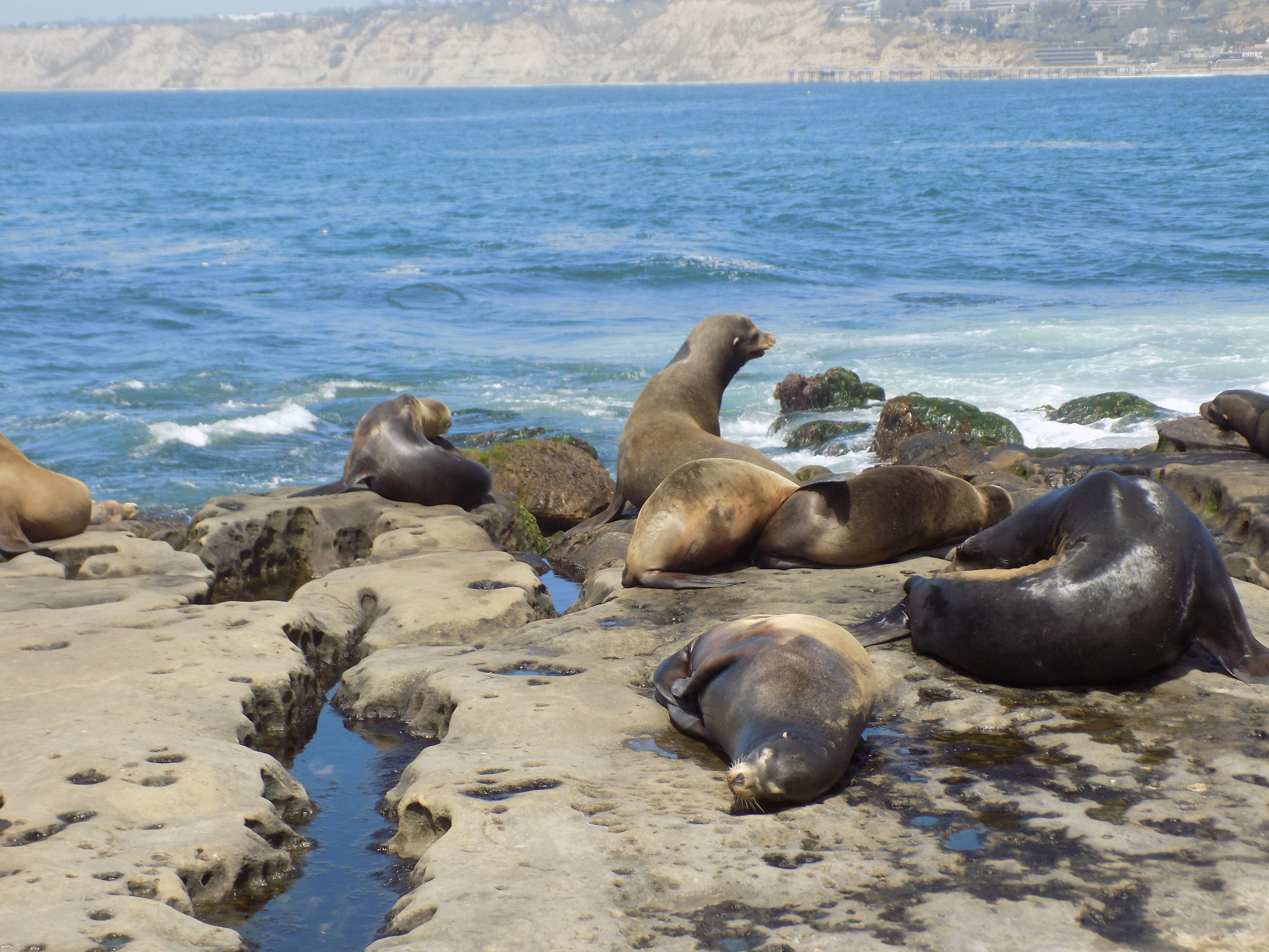 Seals_SeaLions.jpeg